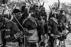 Giovani moran (guerrieri) Samburu a un matrimonio, Area di Archer's Post, Kenya (Pianeta Gaia Viaggi) Tags: kenya kenyani popoli samburu viaggio