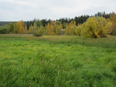 Overgrown wetland (jamica1) Tags: salmon arm shuswap bc british columbia canada grass trees