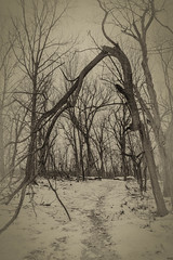 A perfect place for this tree (Robert Evans KC) Tags: rock ice cold winter woods nature tokina atx 116 pro dx 1116mm f28 blue springs kansas city missouri park wife hobby nikon tree snow wood blackandwhite bw