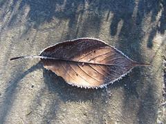 IMG_5588 (dianangelah) Tags: winter eis frost hiver reif kristall christals blatt blätter leaves feuilles natur nature raureif hoarfrost givre geada
