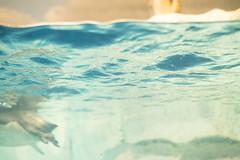 20190111 Nagoya Aquarium 4 (BONGURI) Tags: 名古屋市 愛知県 日本 jp surface reflection penguin 水面 反射 ペンギン light 明るさ water 水 海水 aquarium portofnagoyaaquarium portofnagoya 名古屋港水族館 名古屋港 水族館 minatoward 港区 nagoya 名古屋 aichi 愛知 nikon d850 afsnikkor50mmf18gspecialedition