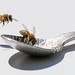hungry bee-5