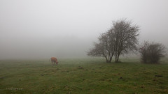Camino de Otzarreta (mabarror) Tags: otzarreta bosque hayas nieblas paísvasco mabarror manuelbarragánrodríguez bosques otoño paisvasco