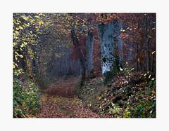 Sous Bois (erick-c) Tags: forêt feuille arbre automne orange froid pluie fuji xt2 80mm