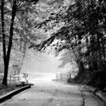No Wrongs Have Been Done to Me When I Walk Amongst the Trees (Black & White, Mammoth Cave National Park) thumbnail