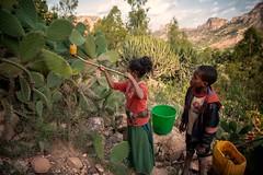 Collecting Cactus Fruit (Rod Waddington) Tags: africa african afrique afrika äthiopien tigray landscape culture cultural ethiopia ethiopian ethnic etiopia ethnicity ethiopie etiopian children boy girl collecting cactus fruit mountains trees outdoor