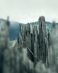 Destruction (arnojenkins) Tags: washington travel sthelens tree destruction texture wood nature mountsthelens mountain bokeh splintered fracture