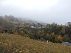 DSCN8095 (keepps) Tags: switzerland suisse schweiz vaud brent fall autumn landscape fog vineyard