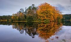 An Autumn Memory, Norway (Vest der ute) Tags: norway rogaland haugesund eivindsvatnet water waterscape landscape lake reflections mirror trees sky clouds weed autumn serene fav25 fav200