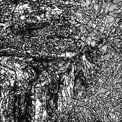 song for a dead tree (j.p.yef) Tags: peterfey jpyef yef monochrome bw sw square iphone nature treestump leaves abstract abstrakt forest digitalart photomanipulation baumstumpf