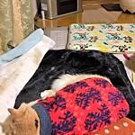 Norio's Nest with Norio thumbnail