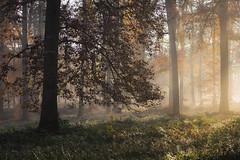 La magie de l'Automne (Thomas Vanderheyden) Tags: automne autumn nature naturesfinest beautifulearth ngc forest foret ambiance brume brouillard fog tree arbre thomasvanderheyden fujifilm landscape paysage colors couleur france
