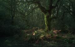 Luz en el Bosque de la Niebla... (Cadiz) (protsalke) Tags: bosque forest fog lights green calm rays tree beautiful cadiz andalucia nikon peace calma verde niebla luz nature naturaleza colors colores arboles