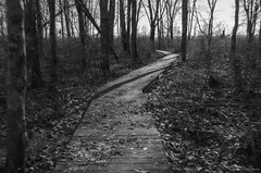 Through the Woods (Bud in Wells, Maine) Tags: laudholm muskietrail november wellsreserve bw boardwalk icm monochrome