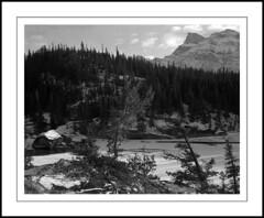 Whirlpool Point (rspohl17) Tags: river snow ice pine alberta kootenayplains winter largeformat 4x5 fp4 film