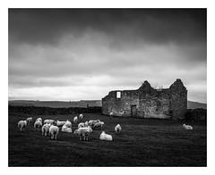 Sheep and barn (fishyfish_arcade) Tags: d3200 nikkor18140mmf3556 nikon peakdistrict nikon18140mmf3556gedvr blackwhite blackandwhite bw monochrome mono barn derelict sheep
