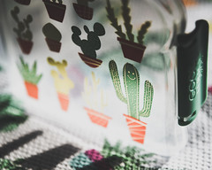 Smile & Wave (HW111) Tags: goodlunch hollywilson cacti cactus containers kids plastic sandwichbox smile snacks succulents sunlight wave cute cheerful