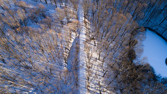 Kal-Haven Trail (bill.d) Tags: dji djiphantom4advanced kalhaventrail kalamazoo kalamazoocounty michigan unitedstates aerialphotography drone field flying forest outdoor park path snow trail tree winter woods us