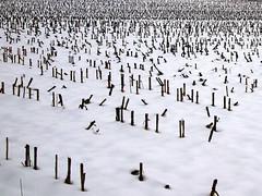 White as snow (ccrrii) Tags: neve snow luragoderba brianza lombardia co italia italy inverno winter
