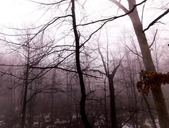 November morn (bidutashjian) Tags: fog trees woods mist forest autumn winter nikon nature outdoors bidutashjian foggy misty wetlands snow