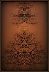 Walnut Tree (Dave Linscheid) Tags: tree texture textured mirroreffect butterfield watonwancounty mn minnesota usa picmonkey frame abstract