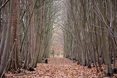 walk along the quiet forest path (roland_tempels) Tags: nature supershot bazel belgium forest