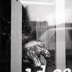 equus (kaumpphoto) Tags: rolleiflex 120 tlr bw black white ilford window display horse street minneapolis glass brass decor decoration figure reflection head equus equestrian oldschool
