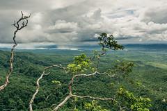 Taung Kalat (Laszlo Horvath.) Tags: taungkalat nikond7100 sigma1835mmf18art landscape lights afterstorm tree