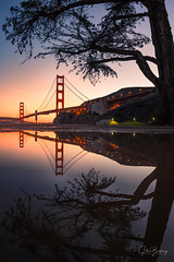 Golden Pond (sberkley123) Tags: sausalito trees nikon marin california usa reflections fortbaker fog sanfrancisco marinheadlands 1424mm goldengatebridge z7