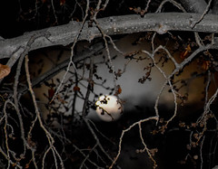 Gently hangs the moon (Jane Olsen) Tags: night dark moon celestialbody sky tree branches calgary nightscape