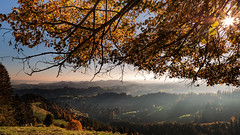 Der Herbst und seine  Farben_AD3I1573 Kopie Kopie (Ercan Akkaya) Tags: derherbst ahornalp birnbaum switzerland schweiz swiss oberargau landscape landschaften landscapephotography dielandschaft