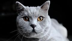 cat's eyes (frax[be]) Tags: portrait fuji 16mm highcontrast
