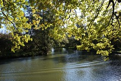Trees by the River Wey 2 (Leimenide) Tags: north downs way river wey green leaves trees nature autumn england surrey