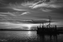 Steveston Harbour Sunset B+W (SonjaPetersonPh♡tography) Tags: steveston harbour fishingboats vessels ships richmond bc britishcolumbia canada sunset silhouettes silhouette stevestonvillage stevestonfishingvillage stevestonwharf stevestonharbour fraserriver boats pier wharf floatingwharf fishermanswharf fishing water river riverscape waterscape waterfront reflections waterreflections