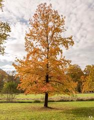 Couleurs d'automne.. Autumn colors.. (Didier Gozzo) Tags: canon ngc outdoor vizille grenoble rhônealpes alpes isère trees arbre colors couleurs autumn automne