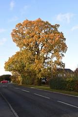 DSC_2243 (PeaTJay) Tags: nikond750 reading lowerearley berkshire gardens outdoors flora fauna plants flowers trees bushes