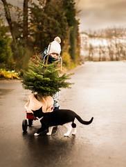 Christmas Tree (agirygula) Tags: christmas mood jinglebells jingle cat christmastree child children winter december november decor decorating blackcat