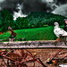 Malga Bassa Farmhouse - A pigeon, two hens and a wooden rooster