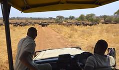 _DSC5204 (acomb) Tags: tanzania roadtrip tandala ruaha
