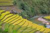 _Y2U2734.0918.Cầu Ba Nhà.Chế Cu Nha.Mù Cang Chải (hoanglongphoto) Tags: asia asian vietnam northvietnam northwestvietnam landscape scenery vietnamlandscape vietnamscenery vietnamscene terraces terracedfields hillside house home one 1 harvest seasonharvest river abstract curve canon canoneos1dx tâybắc yênbái mùcangchải chếcunha cầubanhà phongcảnh ruộngbậcthang lúachín mùagặt ruộngbậcthangmùcangchải sườnđồi ngôinhà đườngcong trừutượng suối dòngsuối mùcangchảimùalúachín mùcangchảimùagặt canonef70200mmf28lisiiusm