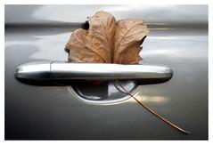 Don't leaf me (leo.roos) Tags: leaf leaves blad bladeren autumn herfst fall a7s fujinon5522 fuji fujica m42 darosa leoroos