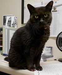 Sweet Sally (threegoodcats) Tags: ar2 blackcats sallycat564 tabbysplace