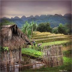 Vietnam - Haut Tonkin - Novembre 2018 (Philippe Hernot) Tags: vietnam tonkin nikon nikond700 philippehernot kodachrome carré square