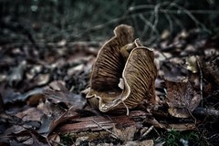 (marco.toet) Tags: pilz woods mood moody naturephotography autumn raw natuur bush fungus mushroom nature natur perfect brilliant outstanding excellent