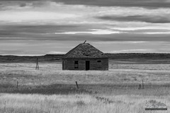 Creepy Cabin (kevin-palmer) Tags: ekalaka montana plains prairie october fall autumn morning cloudy overcast nikond750 nikon180mmf28 telephoto old abandoned cabin house wooden fallingapart blackandwhite monochrome fence windmill homestead grass