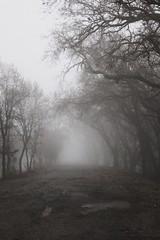 Sacramento Fog (SkylerBrown) Tags: creepy dark fog gothic nature ominous road spooky trees weather winter