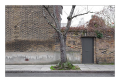 The Built Environment, North London, England. (Joseph O'Malley64) Tags: thebuiltenvironment newtopography newtopographics manmadeenvironment manmadestructures urbanlandscape building structures wall walls architecture architecturalfeatures architecturalphotography britishdocumentaryphotography documentaryphotography banal mundane boringlandscapes northlondon london england uk britain british greatbritain brickwork bricksmortar cement pointing render airbrick vent brickarch bricklintel victorianbuilding victorian doorway door woodendoor sideentrance entrance exit ornamentalcherrytree cherrytree tree weepingbirch ivy ivyovergrown pavement granitekerbing tarmac waterdamage frostdamage coalsootdamage airpollutiondamage acidraindamage hygroscopicsaltsinbrickwork damp fujix fujix100t accuracyprecision
