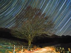 Pioggia di stelle (Fernando De March) Tags: stellestartrailnottestellatocieloinverno tambre belluno veneto dolomiti prealpi cansiglio col indes composita olympus omd1markii
