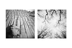 Racconti Dentro Una Cornice (Vincenzo Caniparoli) Tags: analog argentique analogico bw blackandwithe biancoenero dittico diptych diptich dittici dyptich dipthyc d76 emotive film holga holga6x6 holga120 holgagcfn holgan holgacamera holaga120 kodak kodaktrix kodakd76 landscape lomo lomography mediumformat medioformato oristano paesaggio paesaggioumanizzato sardegna sardinia trix trees 120 6x6