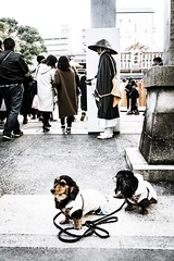 Do not forget (Shigeo Kameshima) Tags: dog monk wait money profit keep mendot people human shrine omen festival event gate